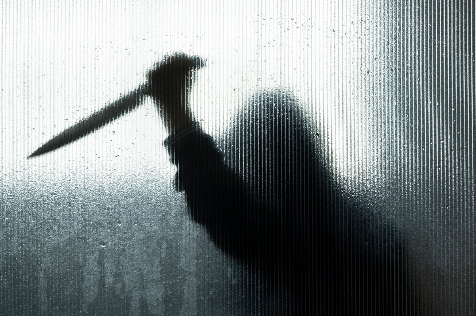 وقتی چاقو دسته خود را میبرد؛ حکایت قتلهای خانوادگی